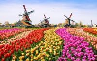 Зображення 1 міні Нідерланди