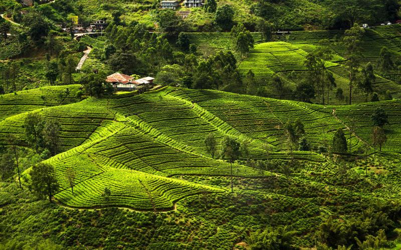 Зображення 6 Шрі-Ланка