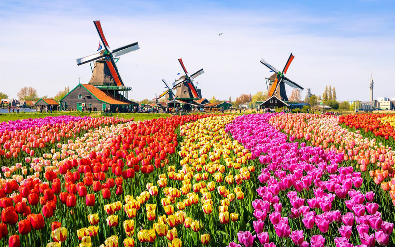 Зображення 1 Нідерланди