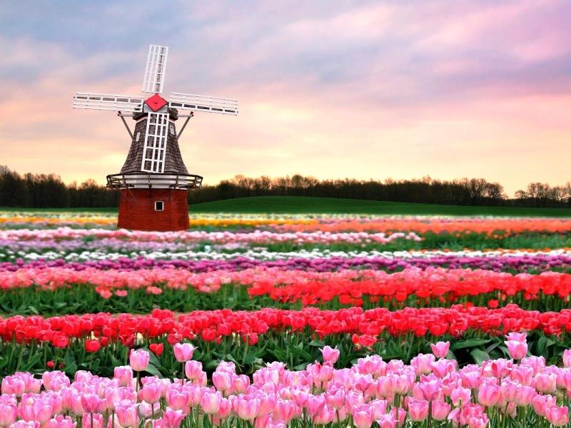 Изображение Нідерланди